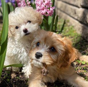 Meet Lulu and Heidi