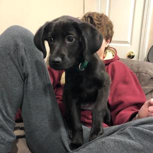 Meet Indy