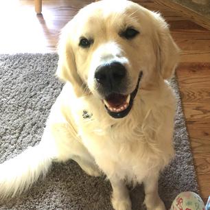 Meet Hudson