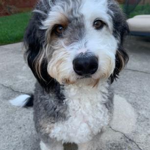Meet Kylo