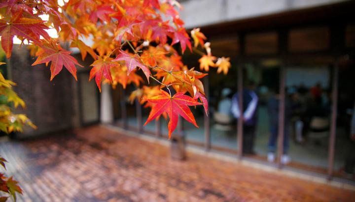 秋の山婚(2017/10/29)