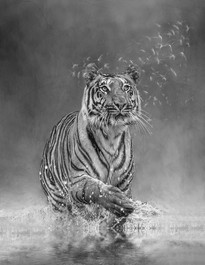 'Tiger Playing' by Laurie  Campbell - PAGB Ribbon