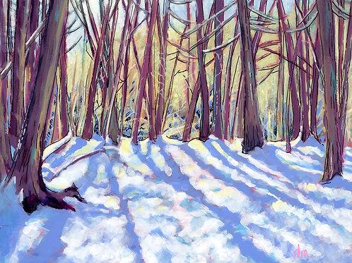 Winter Afternoon Walk