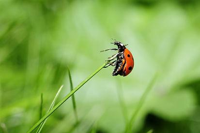 ladybug-796482_1920.jpg
