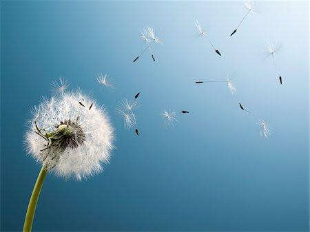 I Wish - Wonder Inspire Serve Heal