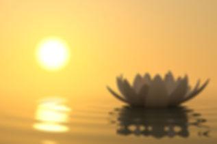 image d'un nénuphar blanc sur l'eau avec soleil