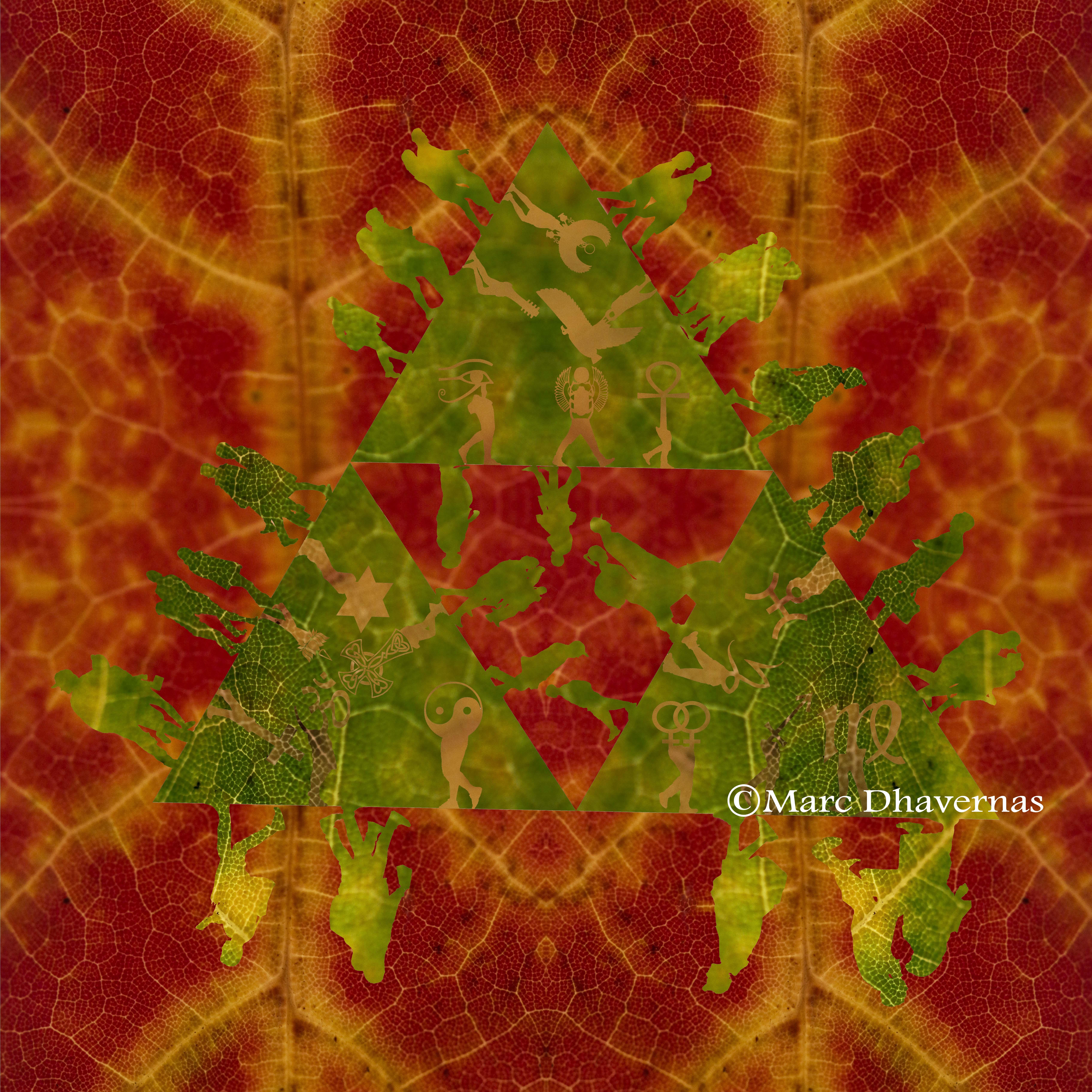 November 4 Leaf texture graffic 18- 250 zoom & 100 macro