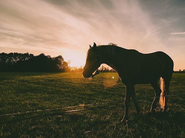 trekking cavallo majella