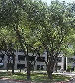 1501-1507-Lyndon-B-Johnson-Fwy-Dallas-TX