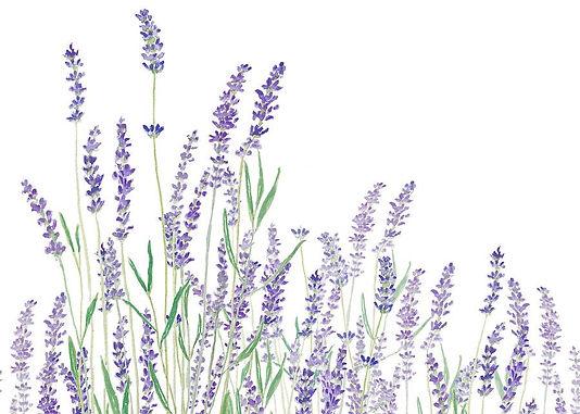 purple-lavender-horizontal-watercolor-co
