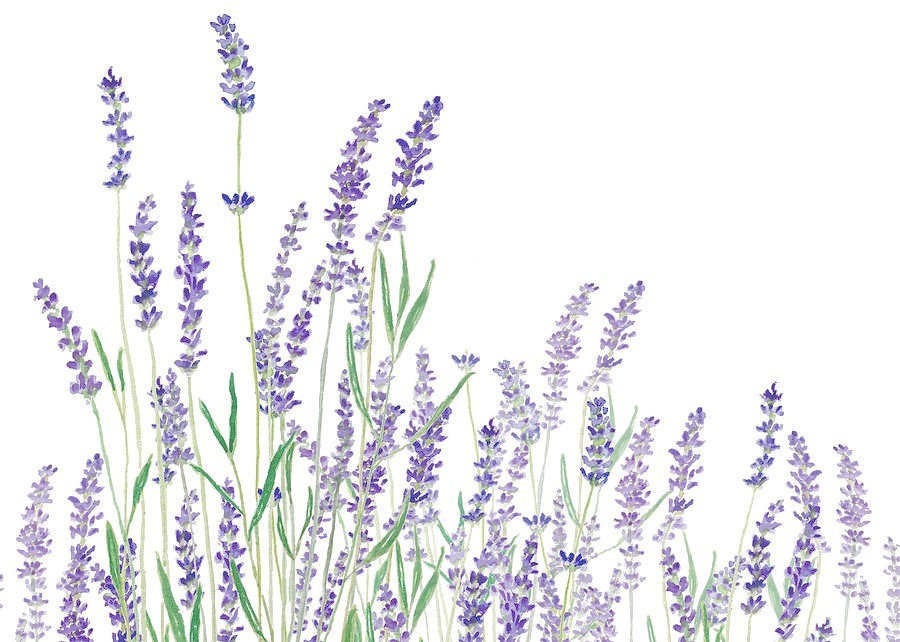 purple-lavender-horizontal-watercolor-co