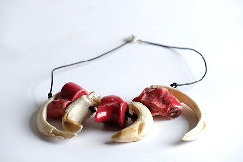 Collar (coral)