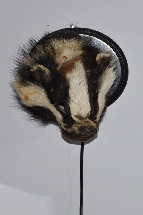 Badger lamp