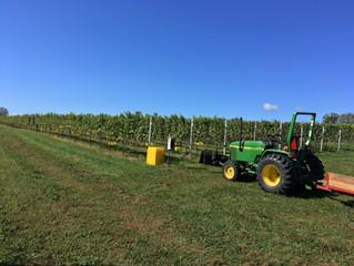 Stunning 2017 harvest
