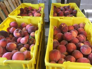 Peach wine - part one
