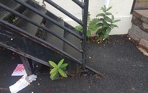 urban nature.jpg