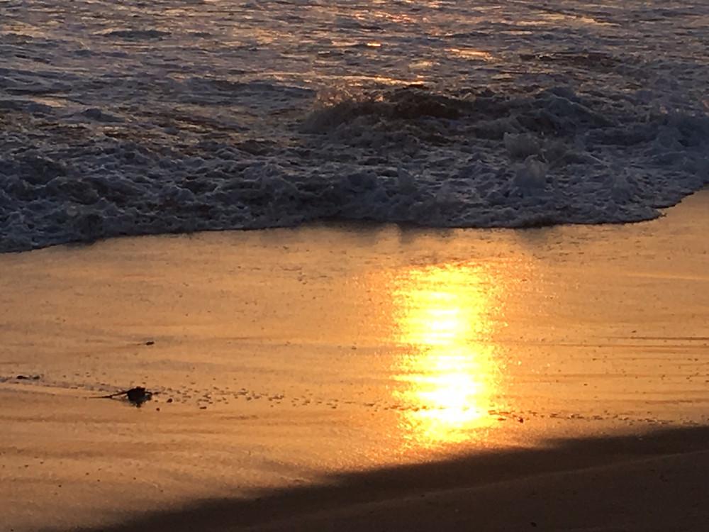 beach sunset as a metaphor for reincarnation