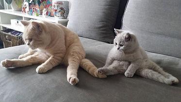 Hangmat katten, kattenhangmat, Lola, handgemaakt, tabby, kattenbenodigdheden