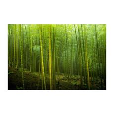 Bamboo Forest in Arashiyama, Kyoto, Japa