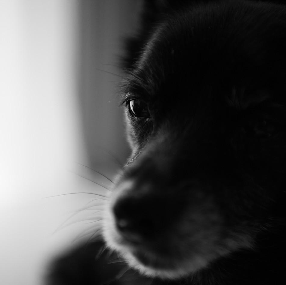 my sweet old dog