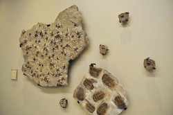 After: Fossils on Display