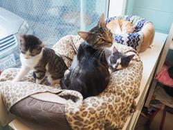 Cat Walk-In Kennels