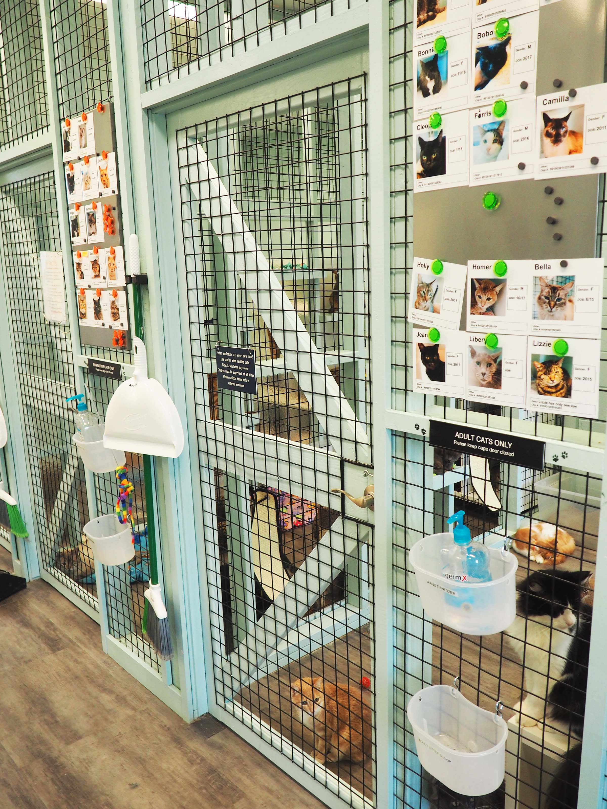 Cat Walk-In Kennels