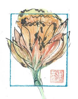 Daffodil 3