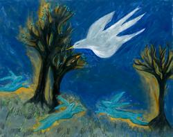 Night Dove