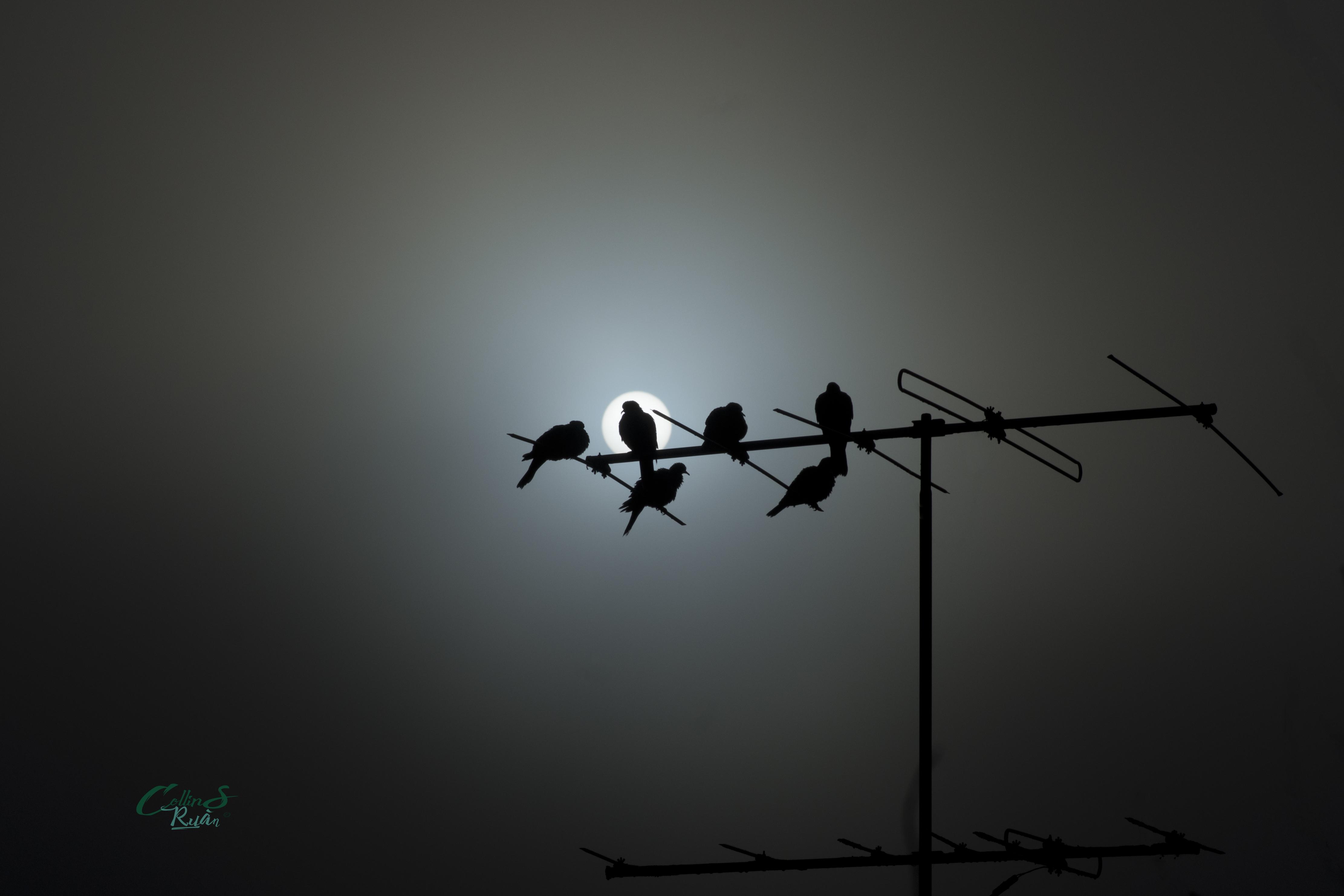 Doves in the fog
