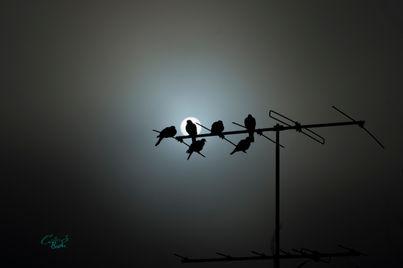 Doves in the fog.jpg