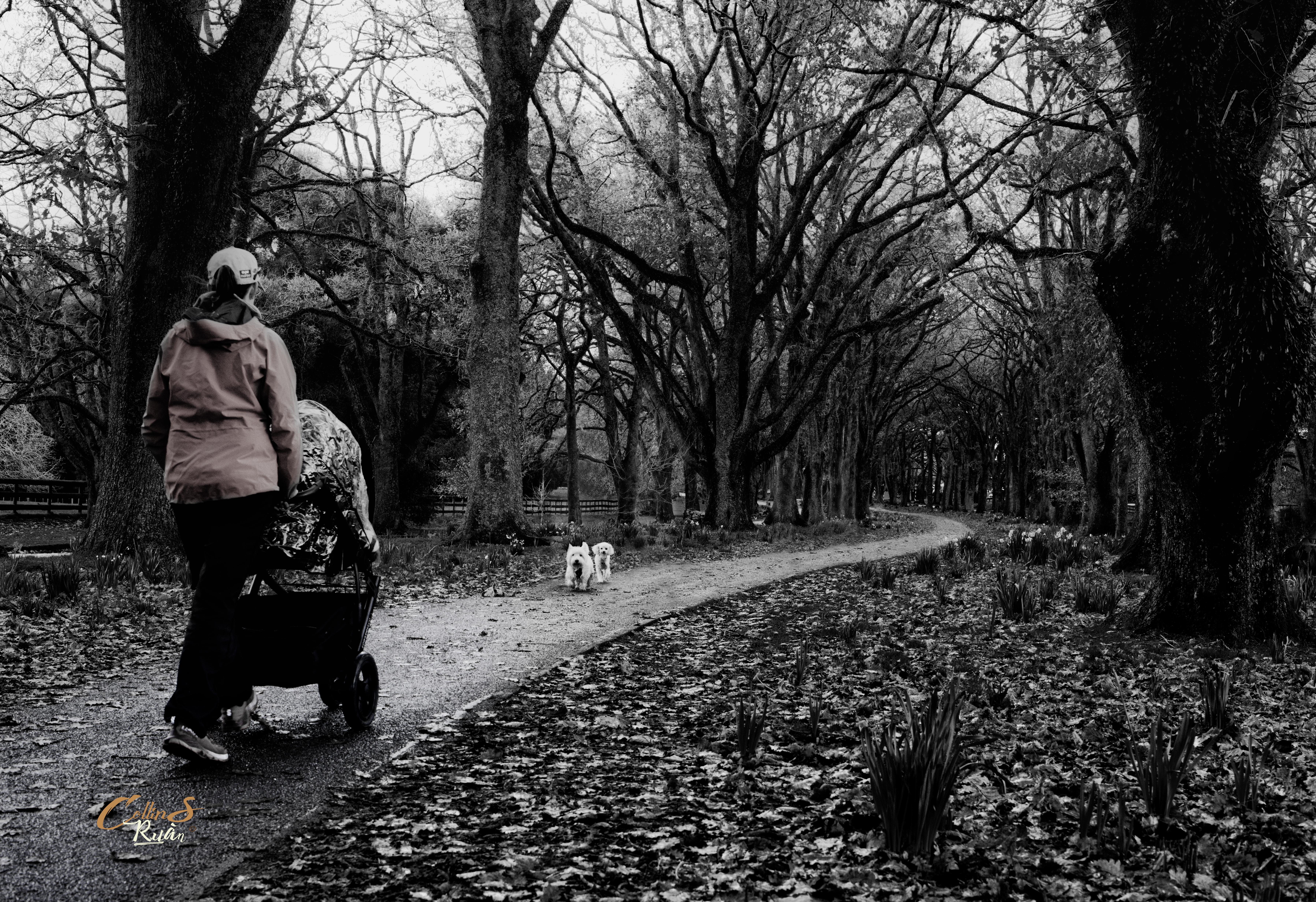 Walkway at One Tree Hill Tokina 50mm PS