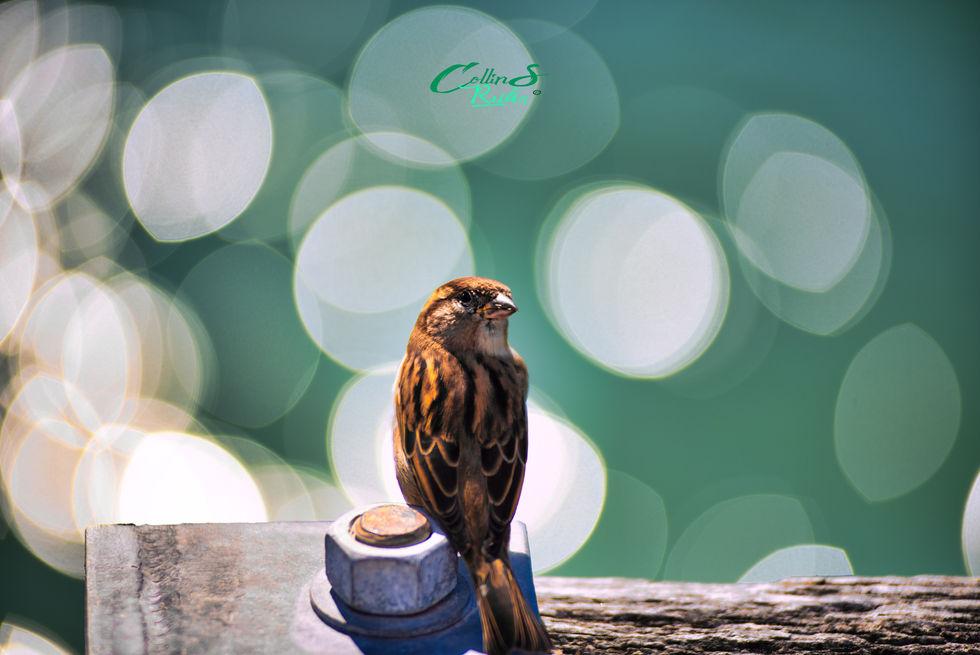 Sparrow  170mm.jpg