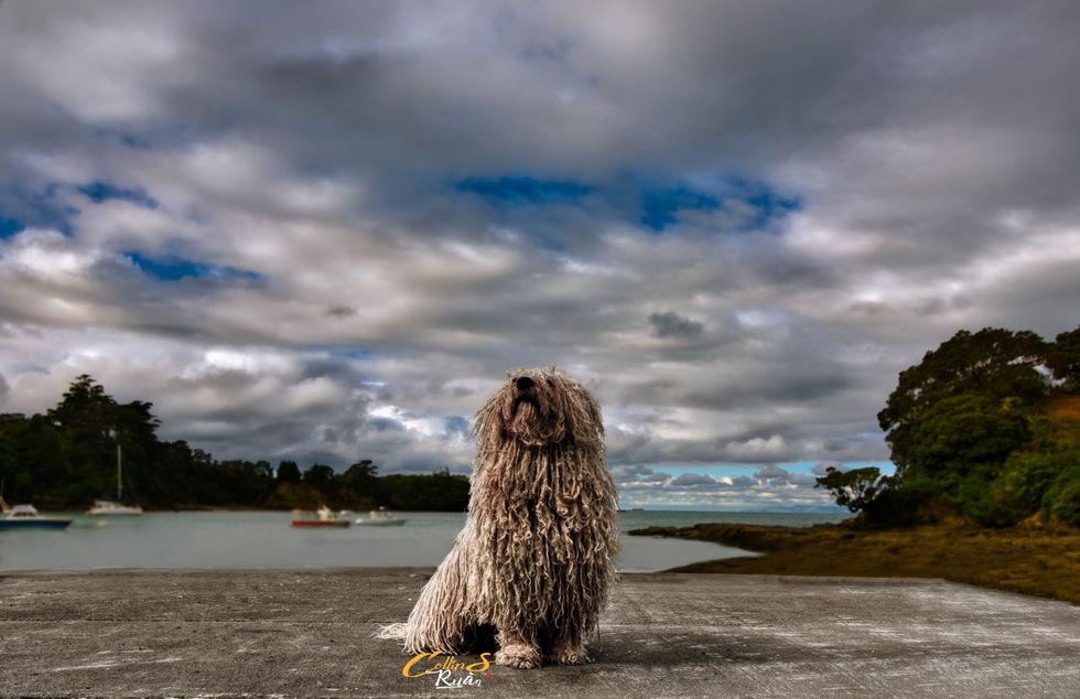 The Leigh Dog.jpg
