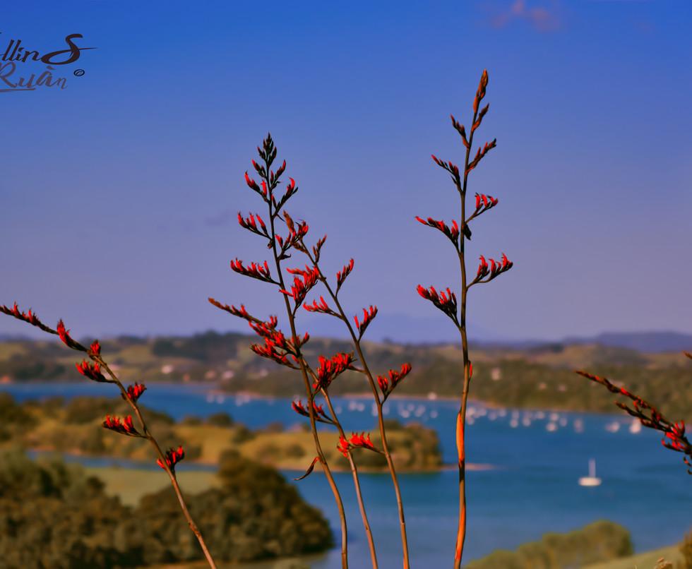 Look over the bay.jpg