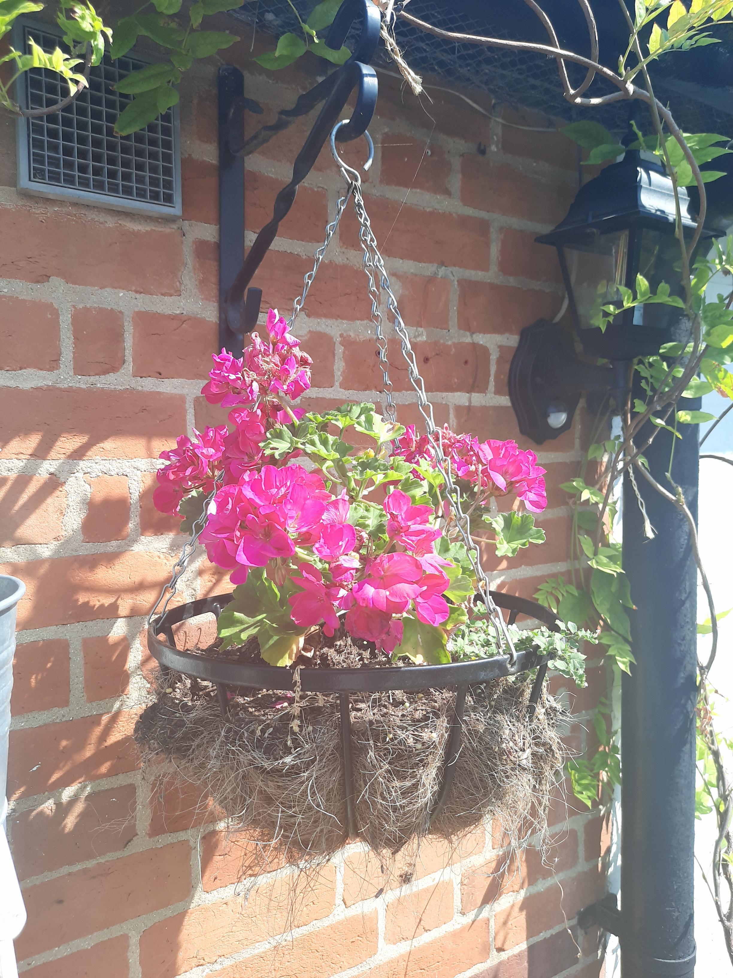 Hanging Baskets, Fuchsia Flowers
