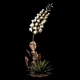 Yucca /Mex Cactus White Blooms