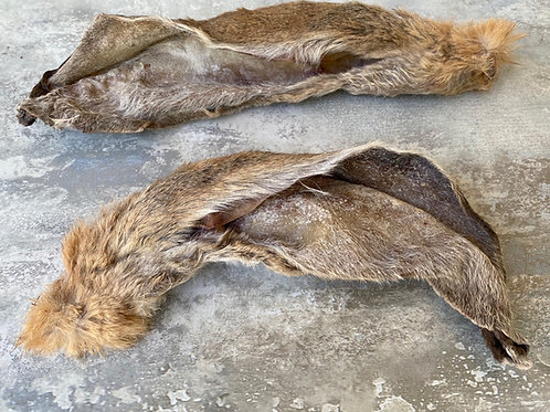 Dried Giant Rabbit Ear