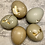 Thumbnail: Freeze Dried Pheasant Eggs