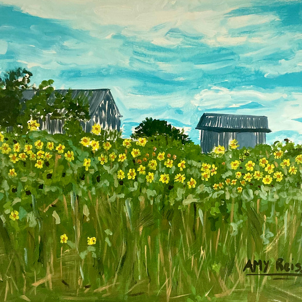 Sunflowers & Grey Barn $275