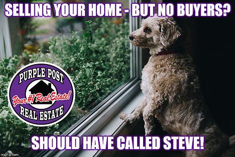 fuzzy-dog-looks-out-window meme.jpg