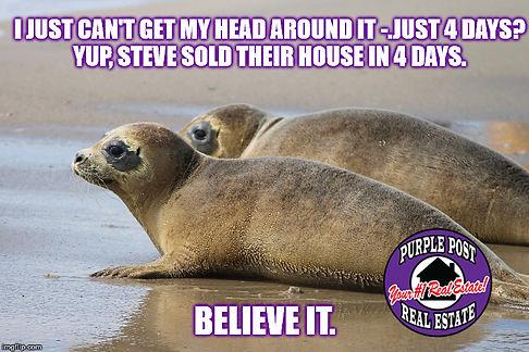 seal pups 4 days.jpg