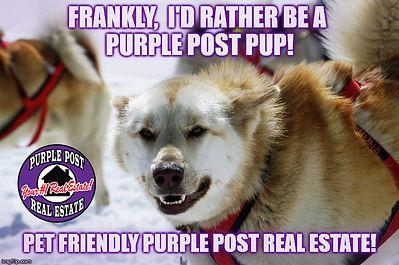sled dog rather be meme.jpg