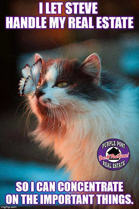 cat butterfly meme.jpg