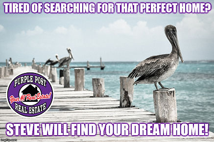 pelican dock steve will find your dream