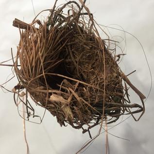 Participant's nest 1