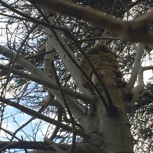 Bird box returned to nature