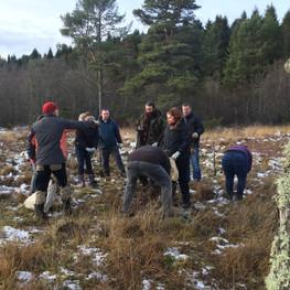 Saving the Birch Saplings