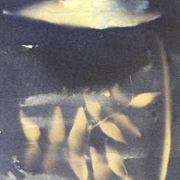 Participant's cyanotype