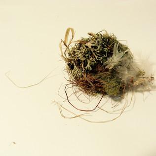 Participant's nest 2